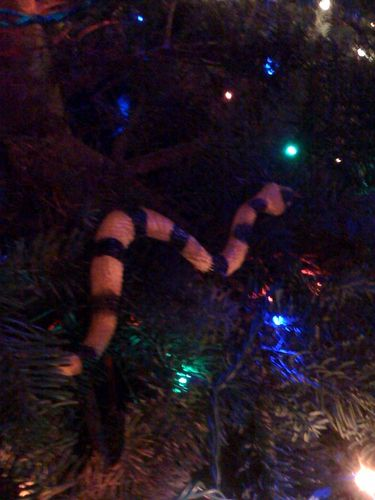 A serpent in a fir tree