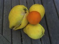Worthless Lemons (orange is for scale)